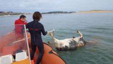 Cruz Roja remolca hasta el puerto de Santander al animal El cadáver de una vaca ha aparecido este martes flotando patas arriba en la bahía de Santander. Efectivos de Cruz […]