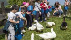 CAMARGO, 20 Un total de 53 niños de entre 5 y 12 años de Camargo han participado en las actividades de la Granja Escuela de la finca de La Garma, […]