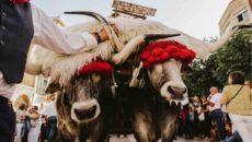La festividad se celebra cada año el último domingo de septiembre REINOSA, 12 El Ayuntamiento de Reinosa ha creado una página web con el fin de «dar un nuevo impulso» […]